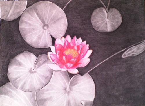 Lotus,Lotus,ART_1385_11688,Artist : Chitra Ariram,Pencil