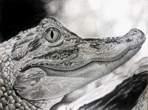 crocodile, killer, instinct, patience, river,Crocodile- Killer Instinct,ART_518_16431,Artist : Aakash Jain,Pencil