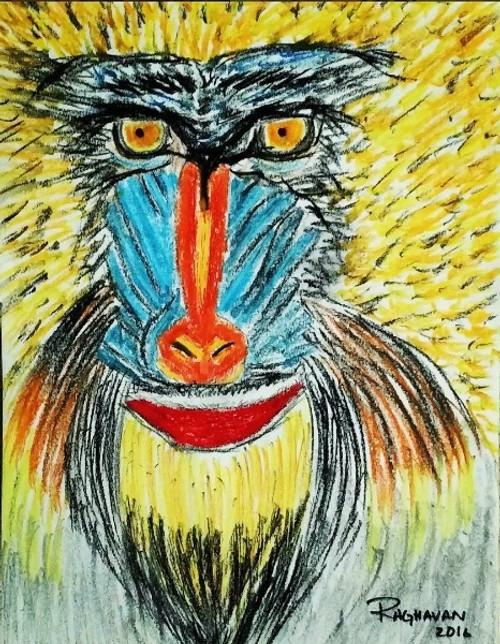 baboon, monkey, wildlife, abstract, animals, nature,Baboon,ART_2914_20679,Artist : Raghavan Rajaram,Pastels