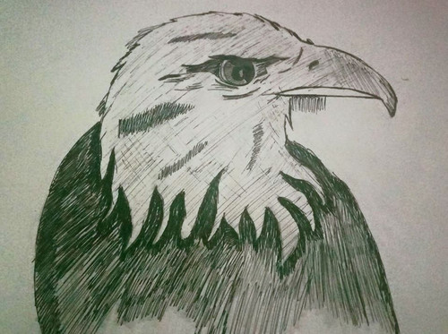 eagle sketch, animal sketch, home decor, sketching,eagle sketch,ART_3060_21148,Artist : Munira Doriwala,Ink
