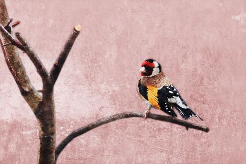 Bird3 - 36in X 24in,31Bird13_3624,Red, Pink, Orange,90X60 Size,Flowers, Animals, Nature Art Canvas Painting