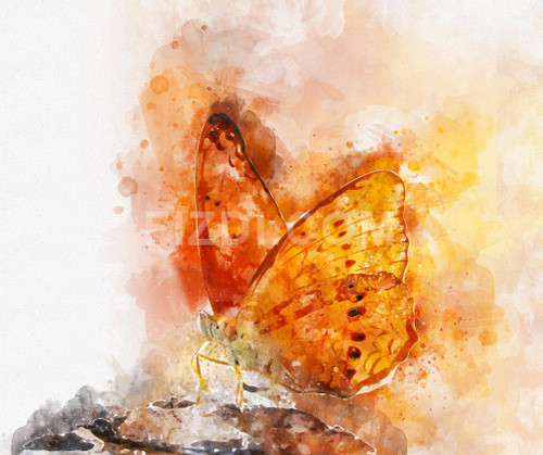 Butterfly (PRT_52) - Canvas Art Print - 25in X 21in