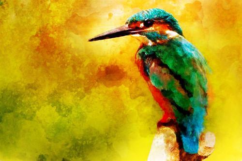Kingfisher (PRT_485) - Canvas Art Print - 32in X 21in