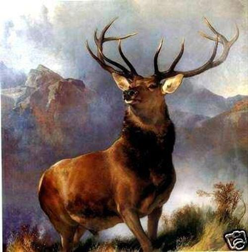 Bull moose,Wild Animal