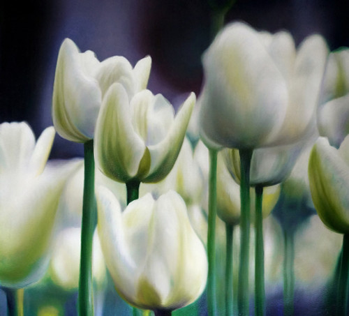 Flowers,Floral,Tulips,White Tulips Flowers,Tulips Garden,Tulips Bunch