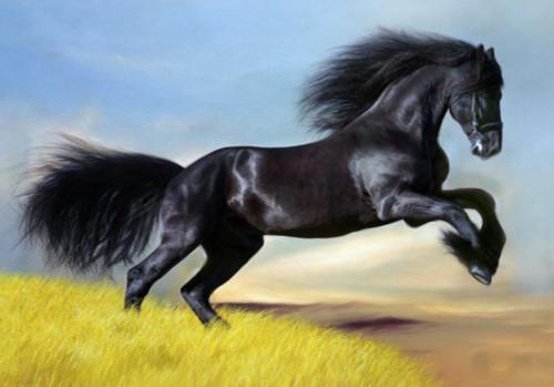 animal, animal painting, wild life,horse, horse painting, black horse, galloping horse, black galloping horse painting