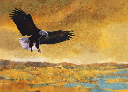 Freedom Haze,American eagle,white headed,Great Bird