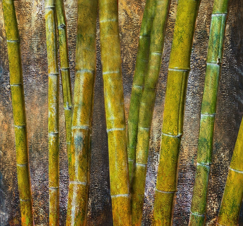 Tree,Green,31Bamboo01,Bamboo Grove, flowering perennial evergreen plants,Bamboo forest
