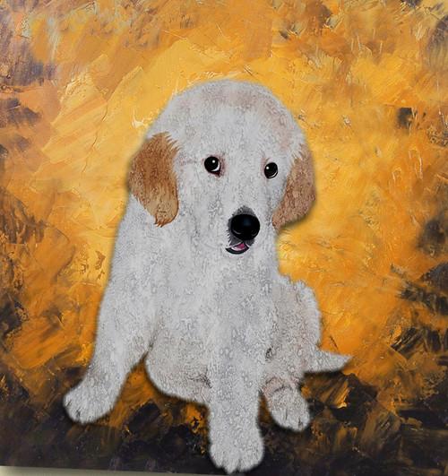 Kids Corner,Puppy ,Small Dog,Cute Dog,Human Friend,White Dog
