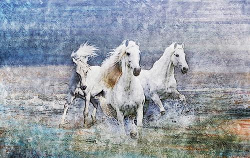 Fengshui Hores,White Horses,White Running Horses,Horse,Speed