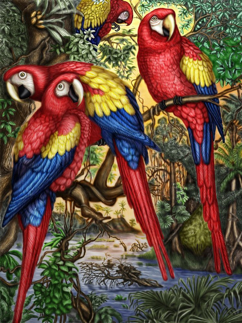 Bird,Parrot Red Mascow,Beautiful Bird Family