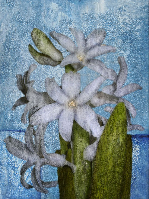 Flower,Floral,Flower Bunch,White Flower Bunch