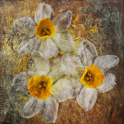 Flower03 - 32in X 32in,41Narcissus04_3232,Yellow, Brown,80X80,Replicas Art Canvas Painting
