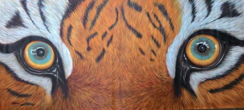 Tiger Eye,Look,Tiger Look