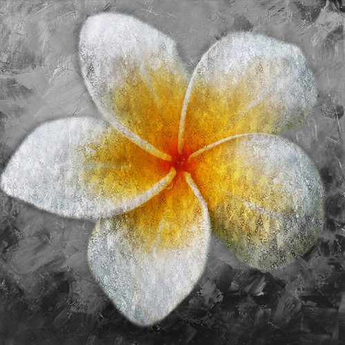 WhiteEggFlower - 32in X 32in,41Egg flower03_3232,Yellow, Brown,80X80,Flowers, Animals, Nature Art Canvas Painting