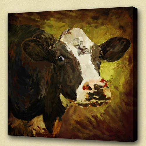 cow, white cow, black cow
