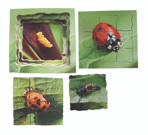 Ladybird Life Cycle Layered Puzzle