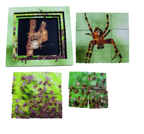 Spider Life Cycle Layered Puzzle