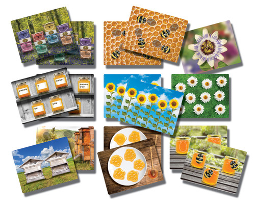 Honey Bee Early Number Cards