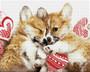 Love Cuddles Diamond Dotz Diamond Painting Kit
