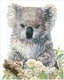 Koala and Eucalyptus Blossom Diamond Dotz Diamond Painting Kit