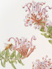 Limited edition print: Grevillia Buxifolia, Grey Spider Flower with Honey Bee