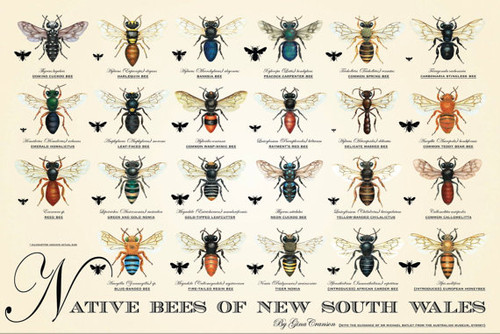 Native Bees of New South Wales