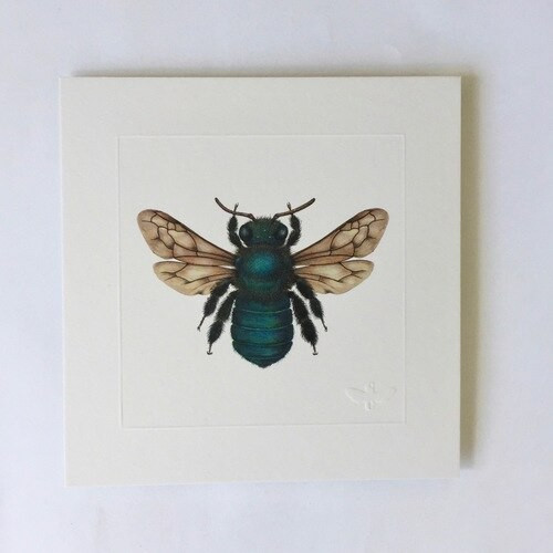 Miniature print. Peacock Carpenter Bee