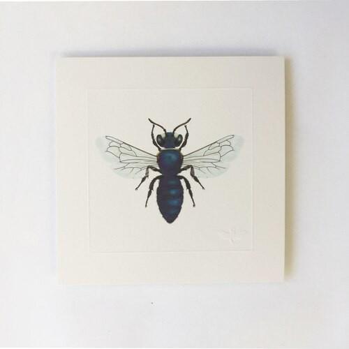 Miniature print. Queensland masked bee.