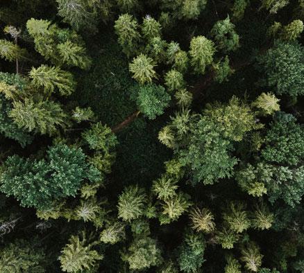 qe-home-Sustainability.jpg
