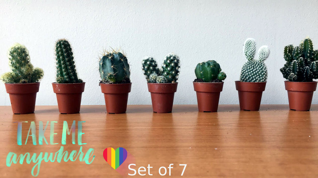 Set Of 7 small cactus