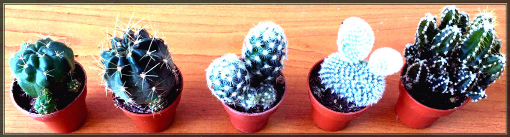 Set of 5 small cactus from above