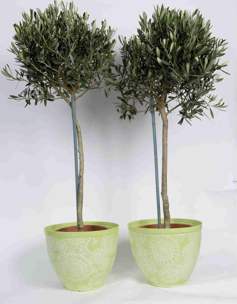Light Green Floral pot with Olives