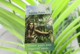 Kentia Palm tree - Tropical oasis