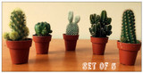 5 tiny cactus ideal Gift. Save on Bulk Offer.