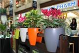 Greenbo railing planters indoors.