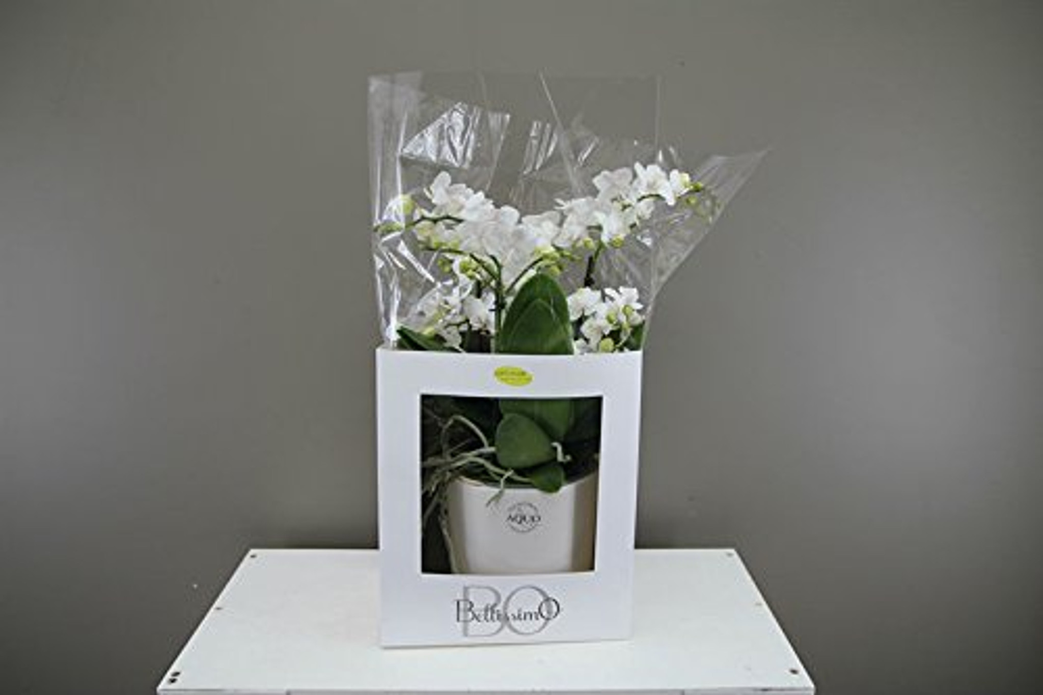 White ceramic potted Orchid