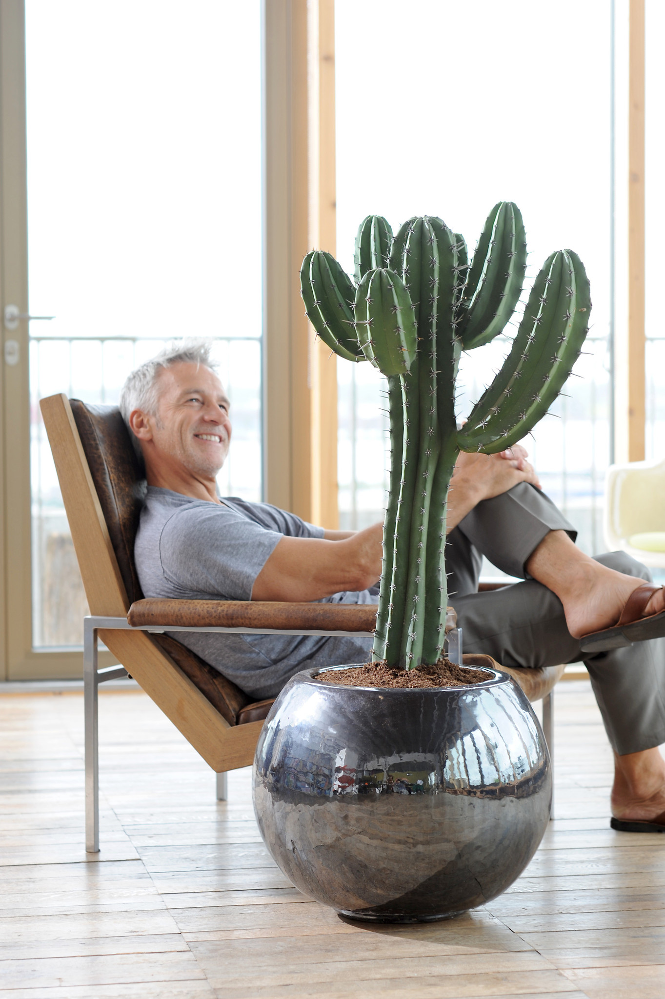 Large Mature cactus in a terracotta pot , for garden , office or as a gift for a cactus collector , Euphorbia Ingens. Order  online we deliver to any address.
