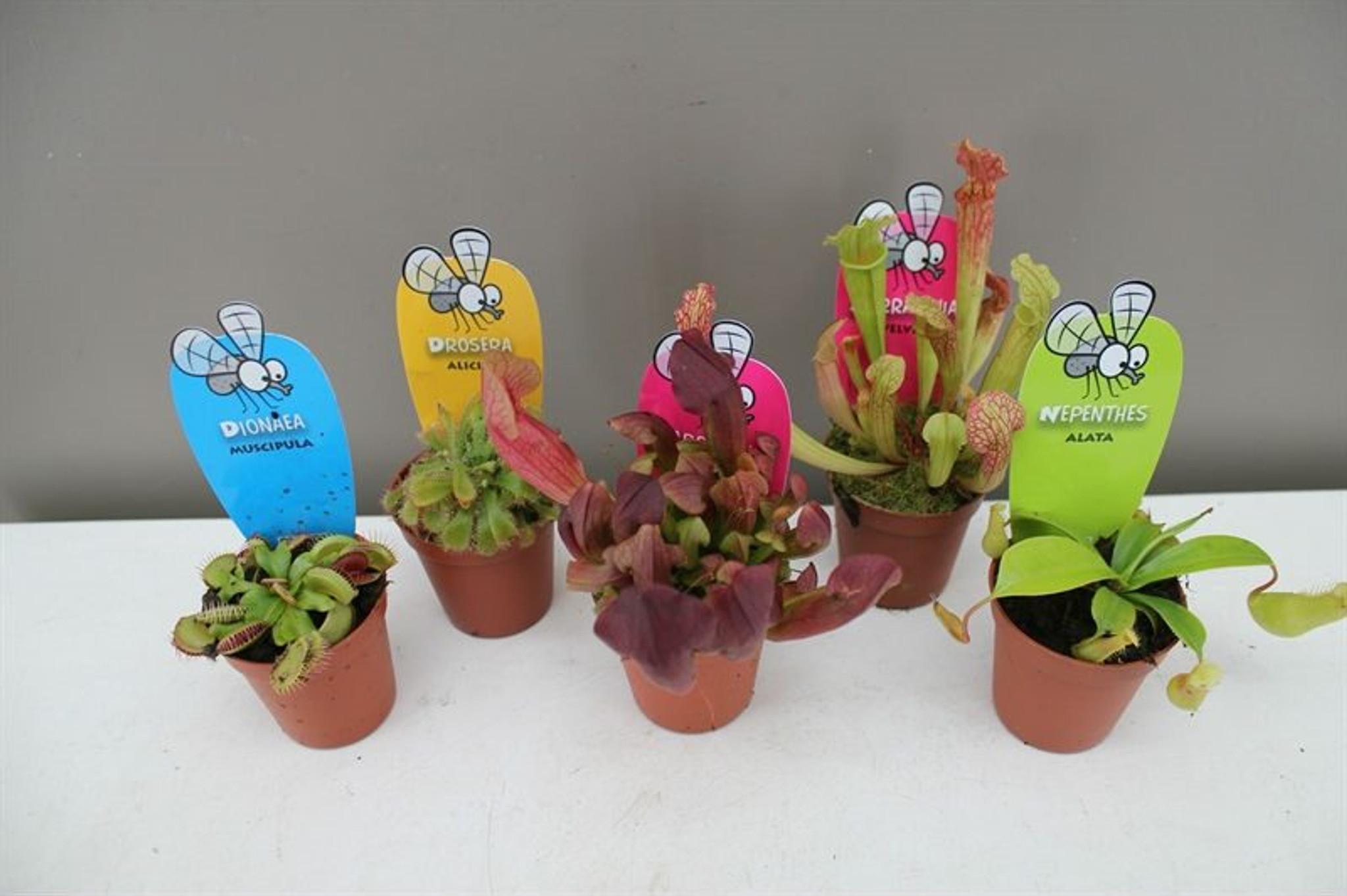 Carnivorous plants variety set