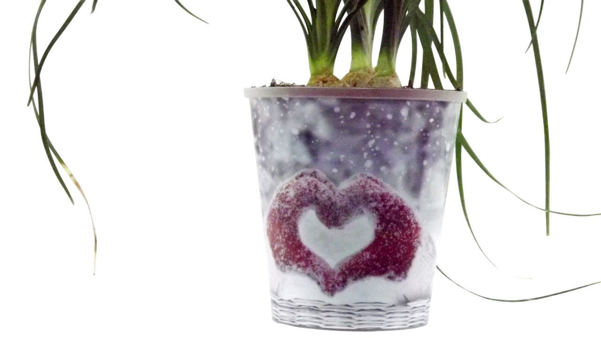 Love Heart Pot