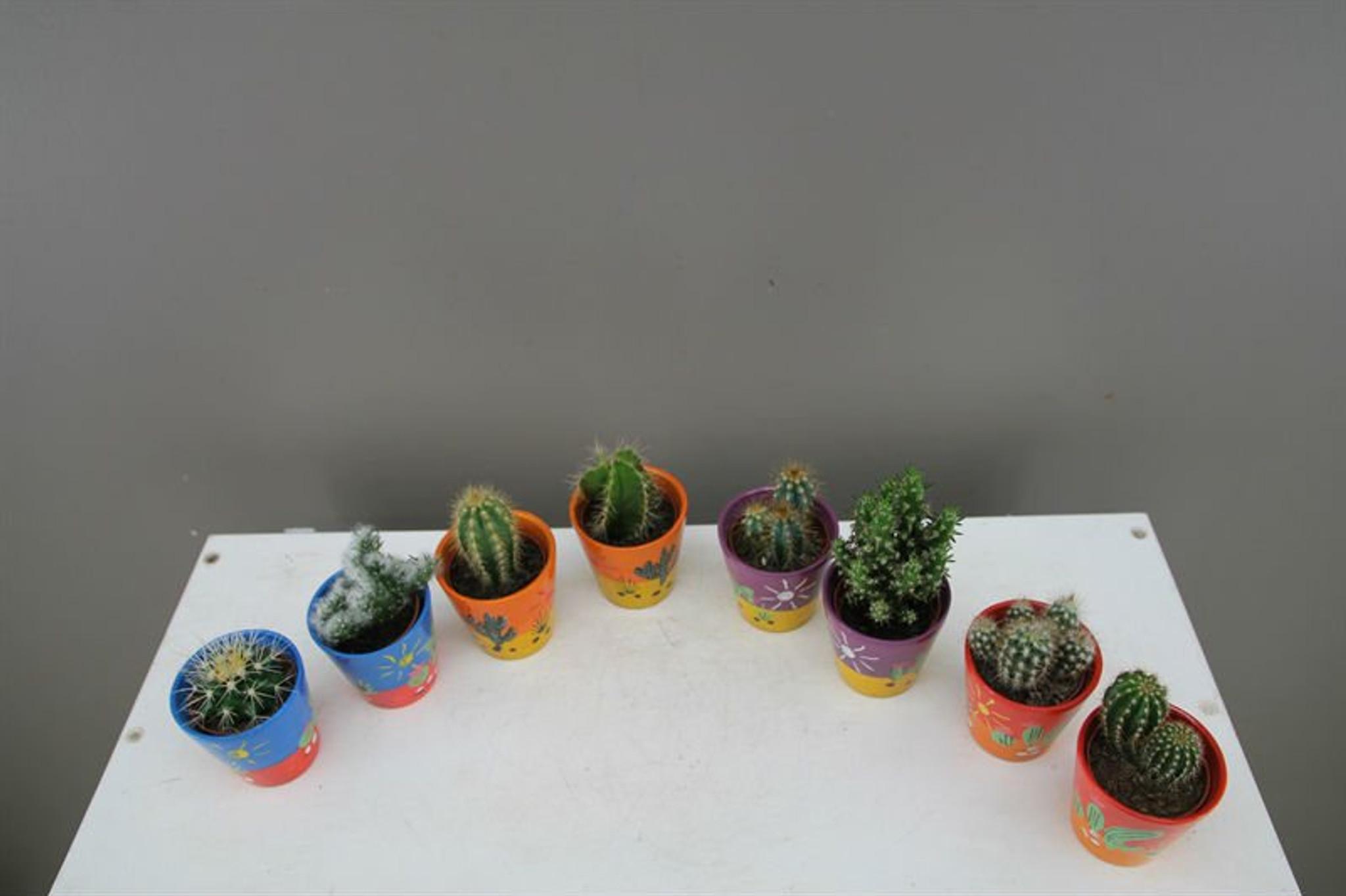 Small cactus in decorative planter