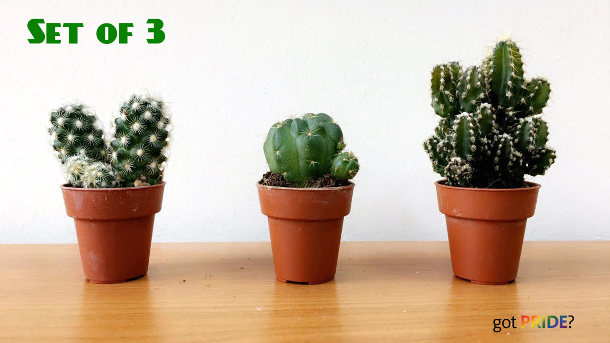 3 small cactus set