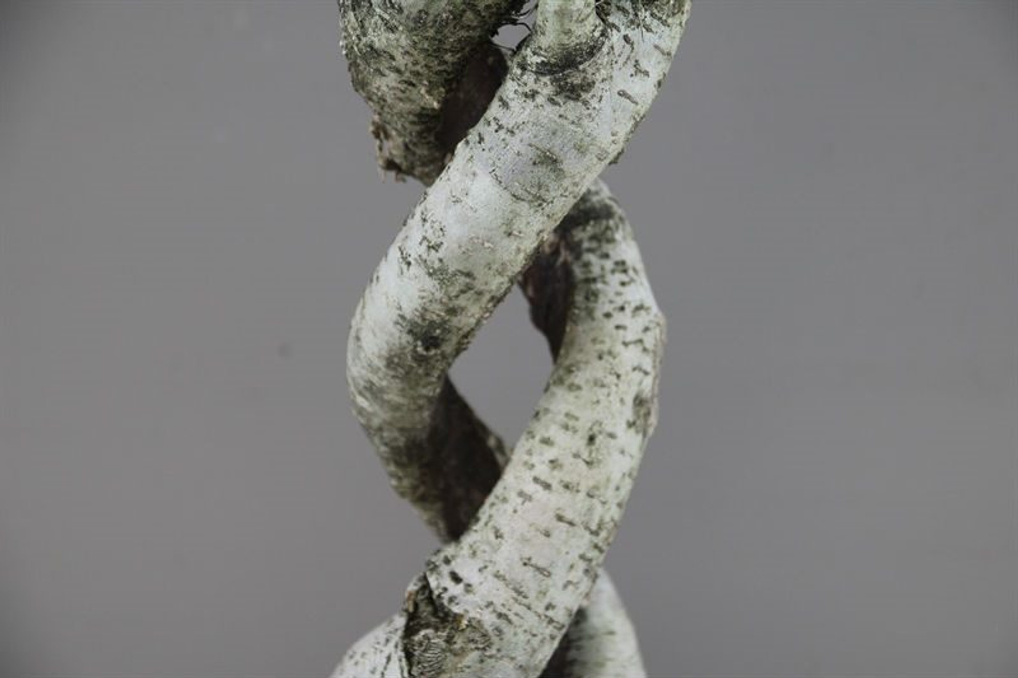 Rare two spiral stem