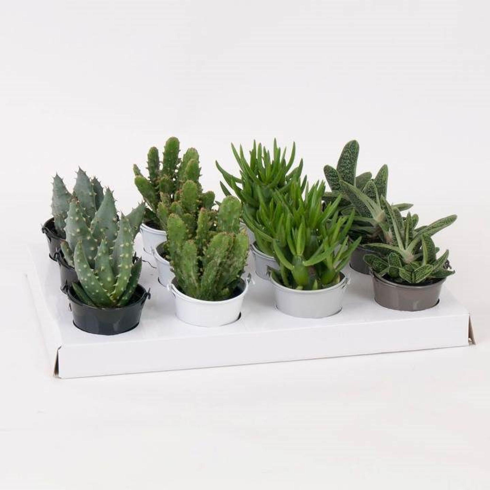 Magnetic planter succulents