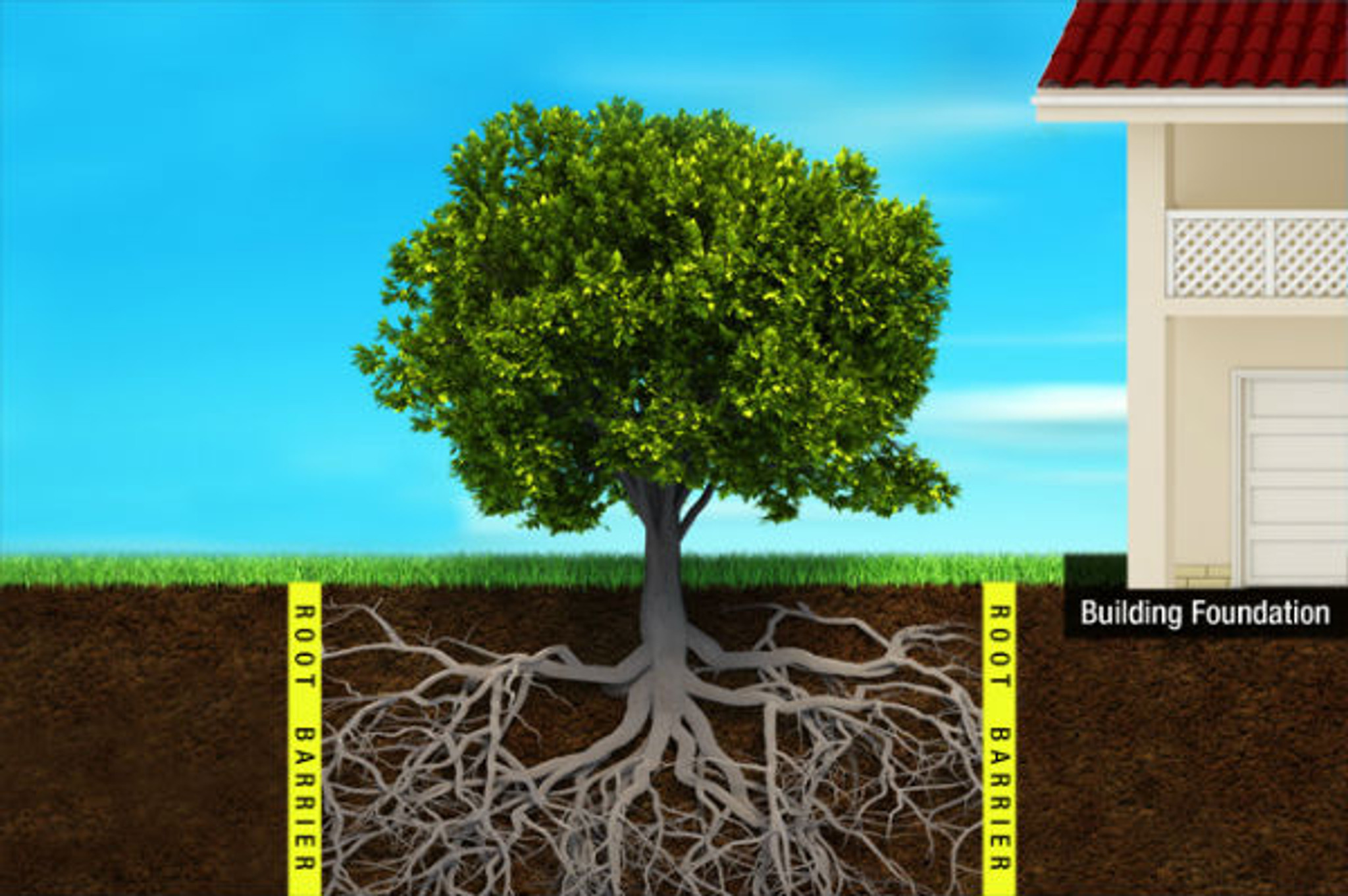 Keep tree roots away from foundations.