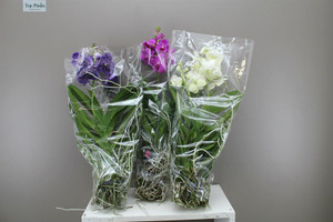 Easy care orchids