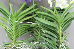 Present for Orchid collectors, lovers and growers