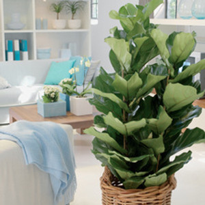 For demonstration similar plant at home environment