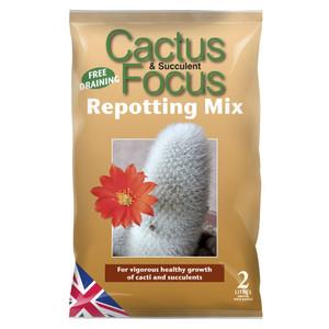 Cactus & Succulent Focus