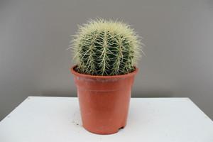 Exotic cactus gift